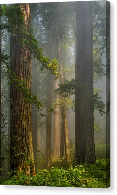 Center Of Forest Canvas Print