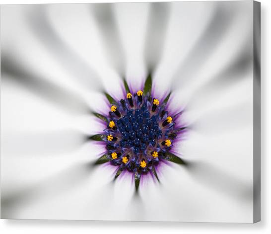 Center Of Life Canvas Print