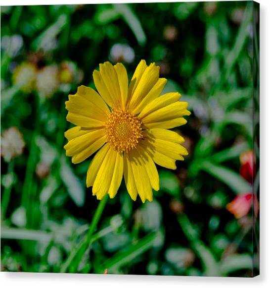 Centered Canvas Print by Kathi Isserman