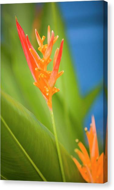 Belize Canvas Print - Central America, Belize, Placencia by John and Lisa Merrill