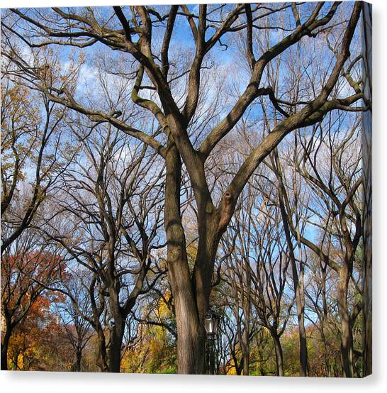 Central Park Trees Canvas Print