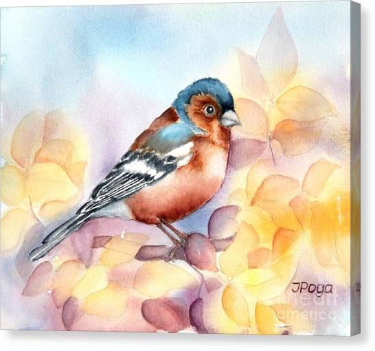 Chaffinch 3 Canvas Print