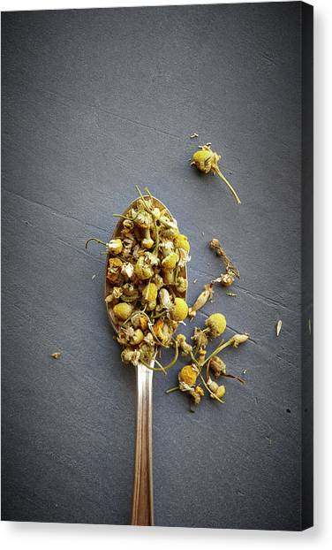 Chamomile Flowers Canvas Print by Lew Robertson