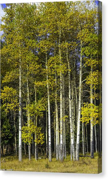 Changing Colors Canvas Print by Tom Wilbert