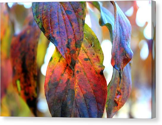 Changing Leaves Canvas Print by Dorothy Hall