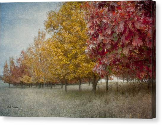 Changing Of The Seasons Canvas Print