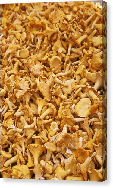 Shrooms Canvas Print - Chanterelle Mushroom by Anonymous