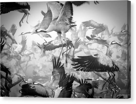 Crane Canvas Print - Chaos by Ido Meirovich
