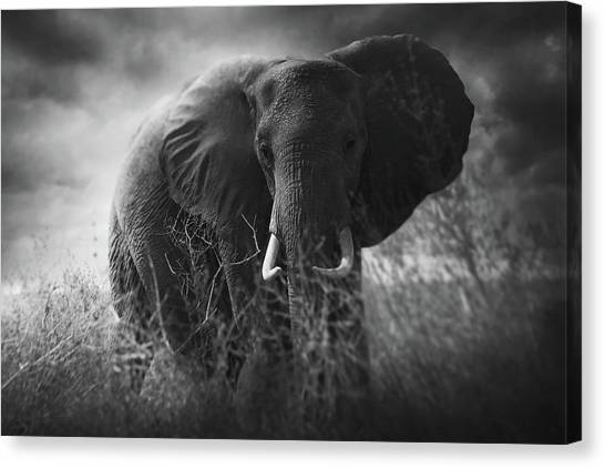 Powerful Canvas Print - Charge by Bjorn Persson