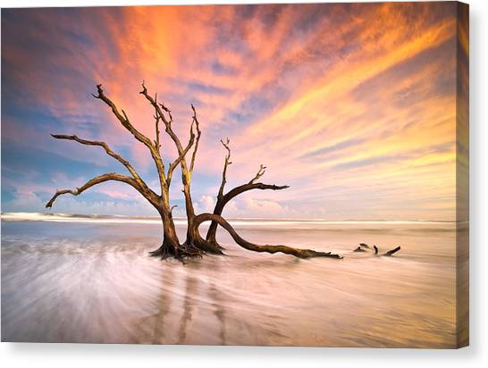 Trees Canvas Print - Charleston Sc Sunset Folly Beach Trees - The Calm by Dave Allen