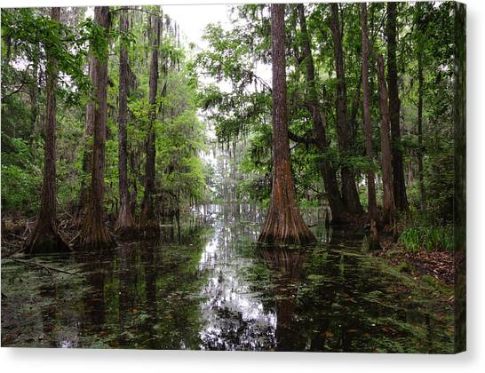 Charleston Swamp Canvas Print