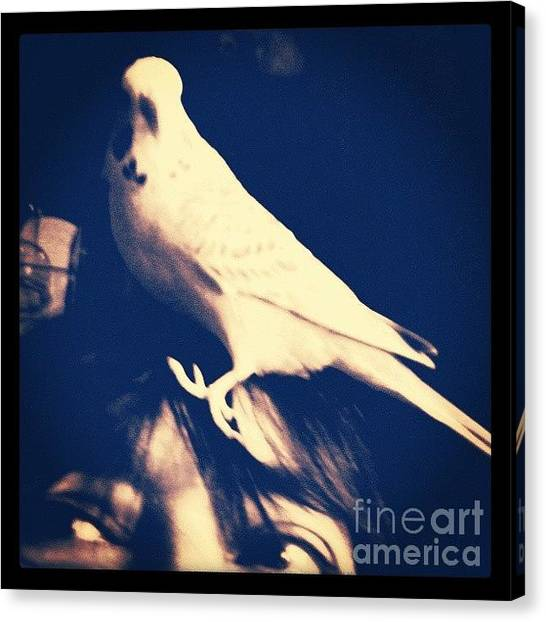 Birds Canvas Print - Charlie Gets A Better View From My Head by Abbie Shores