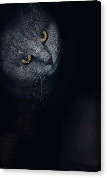 Chartreuxes Canvas Print - Chartreux Cat Standing In Front by Marko Radovanovic