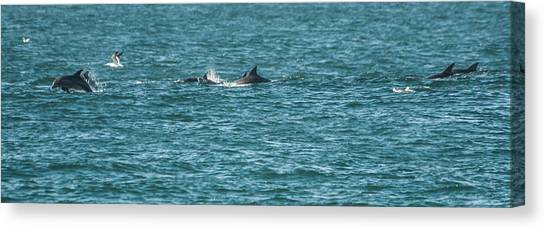 Bottlenose Dolphins Canvas Print - Chasing by Alistair Lyne