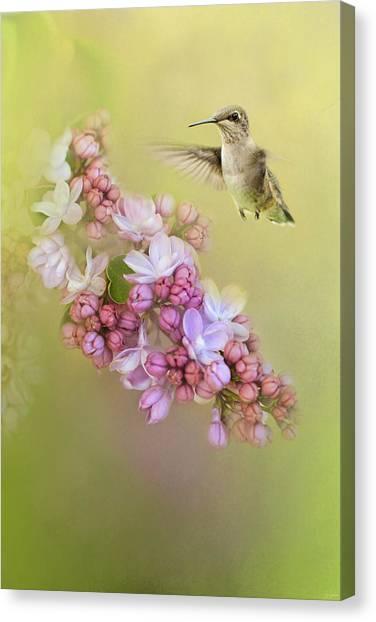 Chasing Lilacs Canvas Print