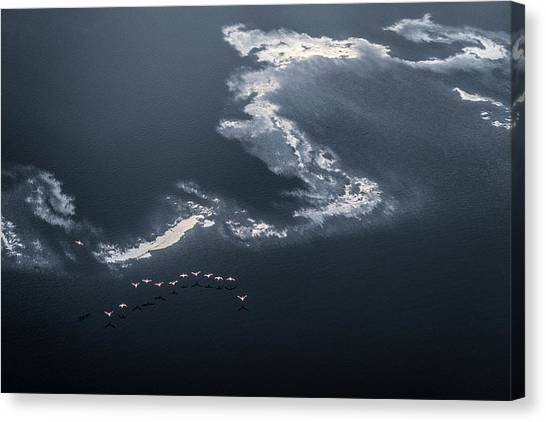 Chasing The Waves Canvas Print by John Fan