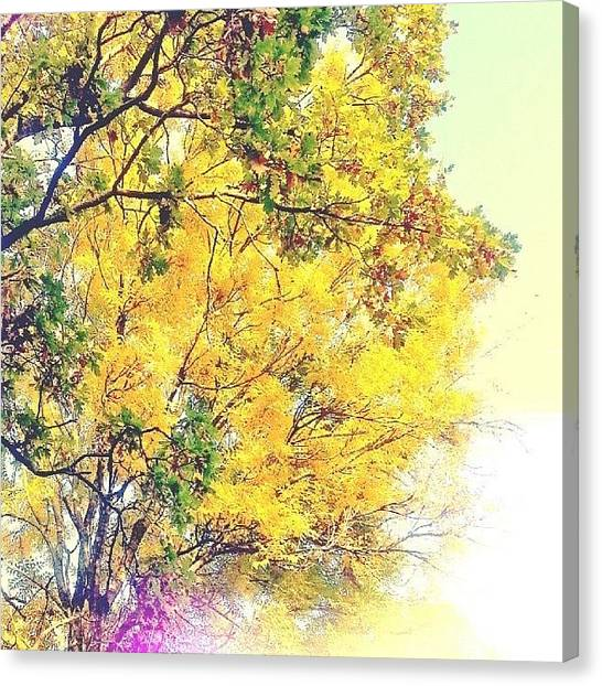 Ashes Canvas Print - #chasingautumn #leaves #foliage #nature by Alexandra Cook