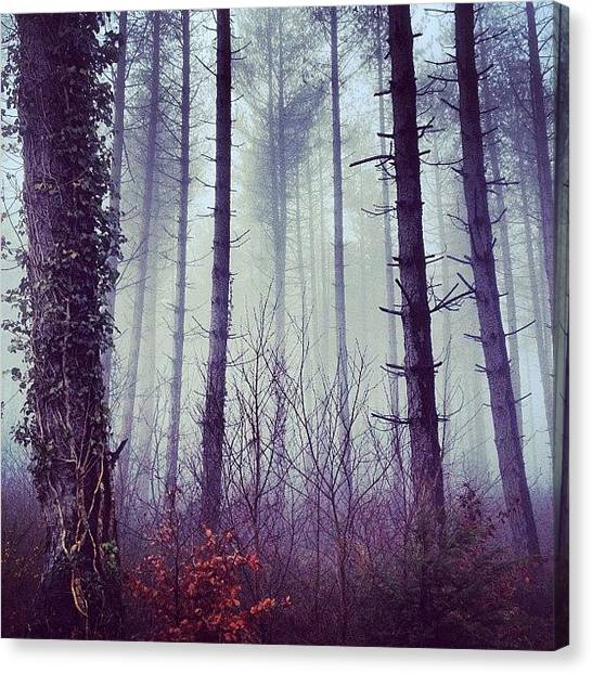 Foggy Forests Canvas Print - #chasingfog + #latergram | #fog #foggy by Sophia Christie