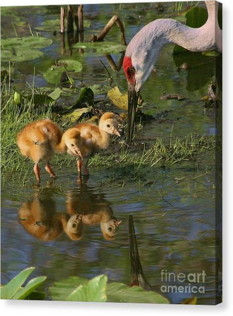 Checking On The Babies Canvas Print