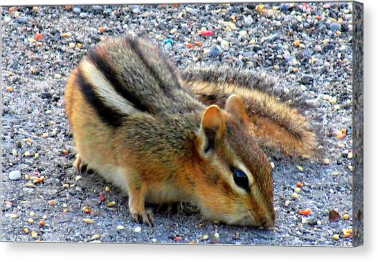 Cheeky Chipmunk Canvas Print