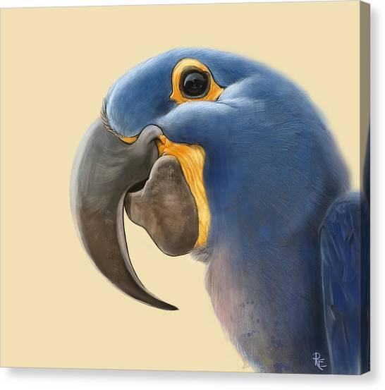 Cheeky Parrot Canvas Print