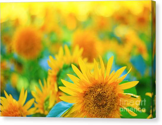 Cheerful And Happy Yellow Sunflower Field In Summer Canvas Print