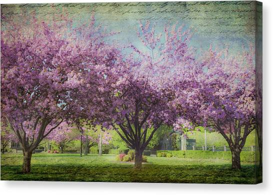 Cheery Cherry Trees - Nostalgic Canvas Print