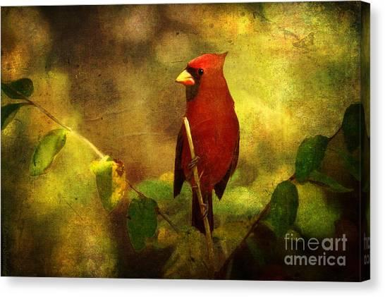 Cheery Red Cardinal  Canvas Print