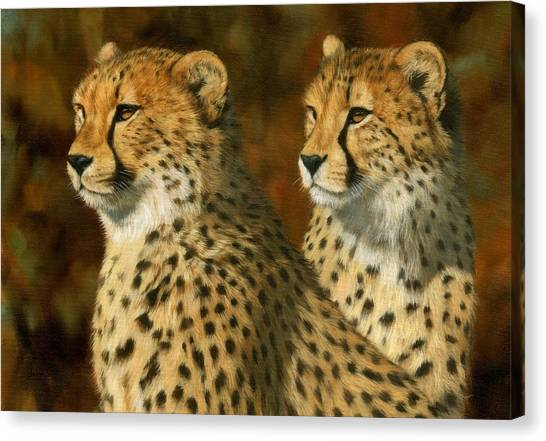 Cheetah Brothers Canvas Print