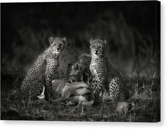 Cheetahs Canvas Print - Cheetah Cubs by Mario Moreno