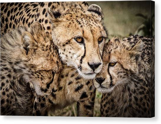 Kenyan Canvas Print - Cheetah Family Portrait by Mike Gaudaur