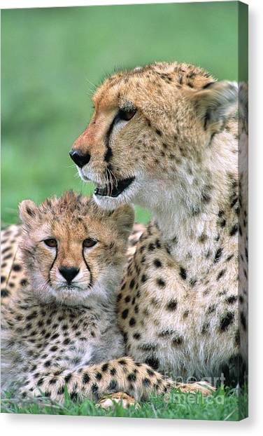 Canvas Print featuring the photograph Cheetah Mother And Cub by Yva Momatiuk John Eastcott