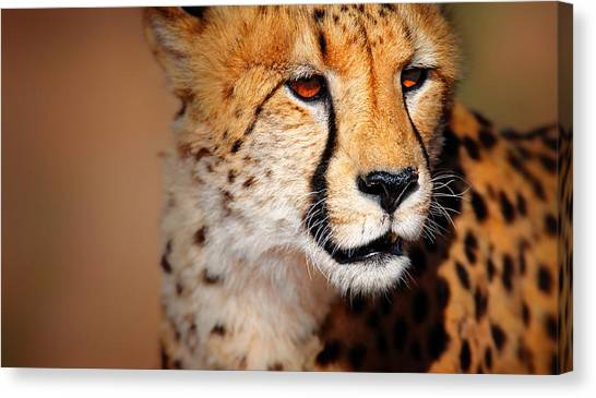Carnivore Canvas Print - Cheetah Portrait by Johan Swanepoel