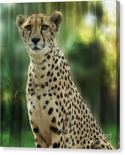 Cheetah Spots Canvas Print