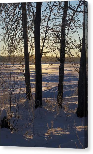 Chena River Trees Canvas Print