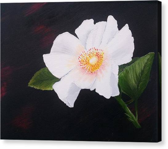 Cherokee Rose Canvas Print