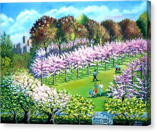 Cherry Blossems At The Brooklyn Botanical Garden Canvas Print