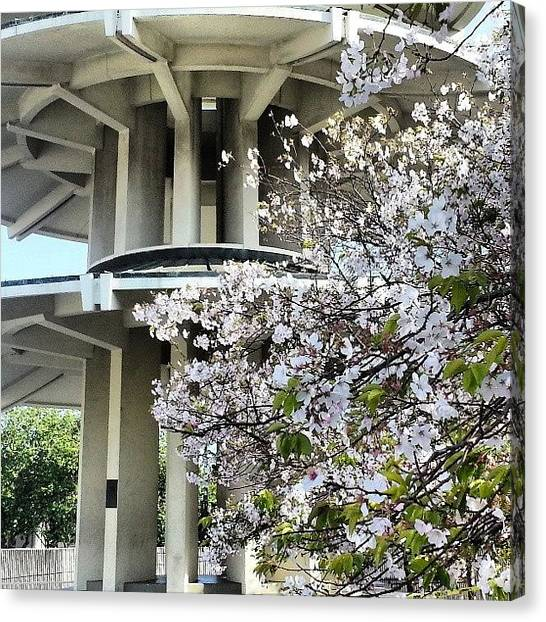 Canvas Print - Cherry Blossom Festival - Japantown by Pablo Picasso