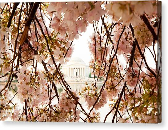 Jefferson Memorial Canvas Print - Cherry Blossom Flowers In Washington Dc by Susan Schmitz