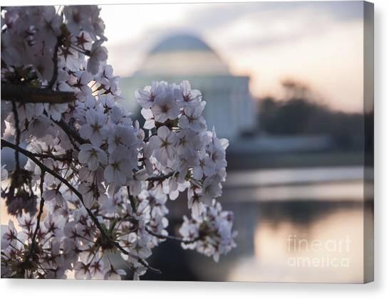 Cherry Blossom Memories Canvas Print