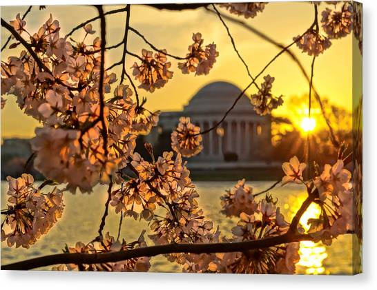 Washington Nationals Canvas Print - Cherry Blossom Sunrise  by Sarah Ferrante