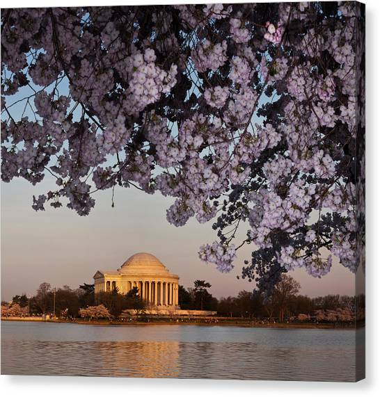 Jefferson Memorial Canvas Print - Cherry Blossom Tree With A Memorial by Panoramic Images