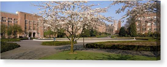 University Of Washington Canvas Print - Cherry Blossom Trees In A University by Panoramic Images