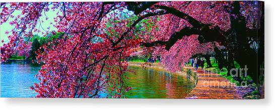 Cherry Blossom Walk Tidal Basin At 17th Street Canvas Print