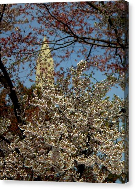 Cherry Blossoms And The Monument Canvas Print