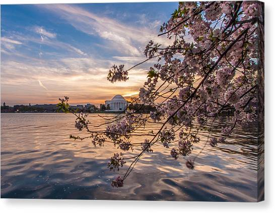 Berries Canvas Print - Cherry Blossoms At The Jefferson Memorial by Tony Delsignore