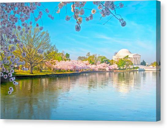 Cherry Blossoms From Shadow To Light Canvas Print