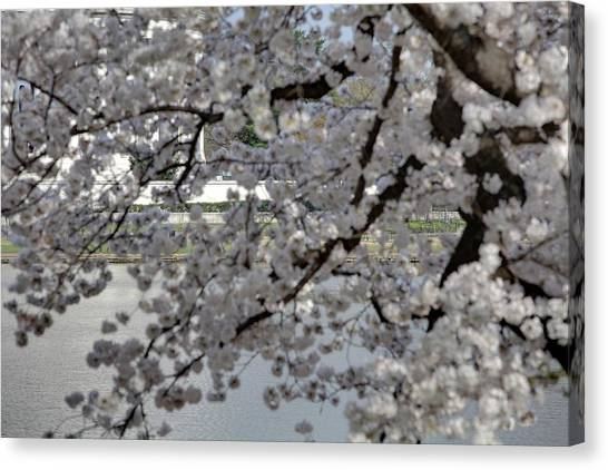 Cherry Blossoms With Jefferson Memorial - Washington Dc - 011338 Canvas Print by DC Photographer