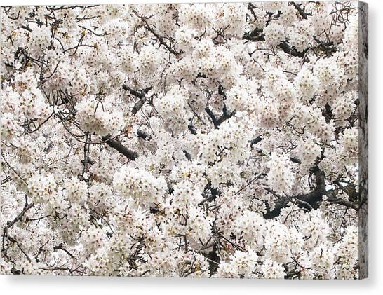 Cherry Dream Canvas Print