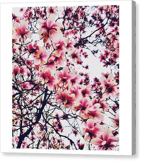 Tsunamis Canvas Print - Cherry Is The Tree That Will Sympathize by Laura  Warrington